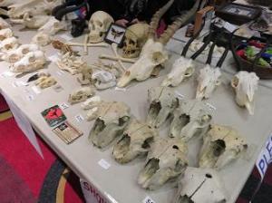Skulls, skulls and more skulls.