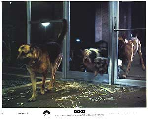 Dogs_poster